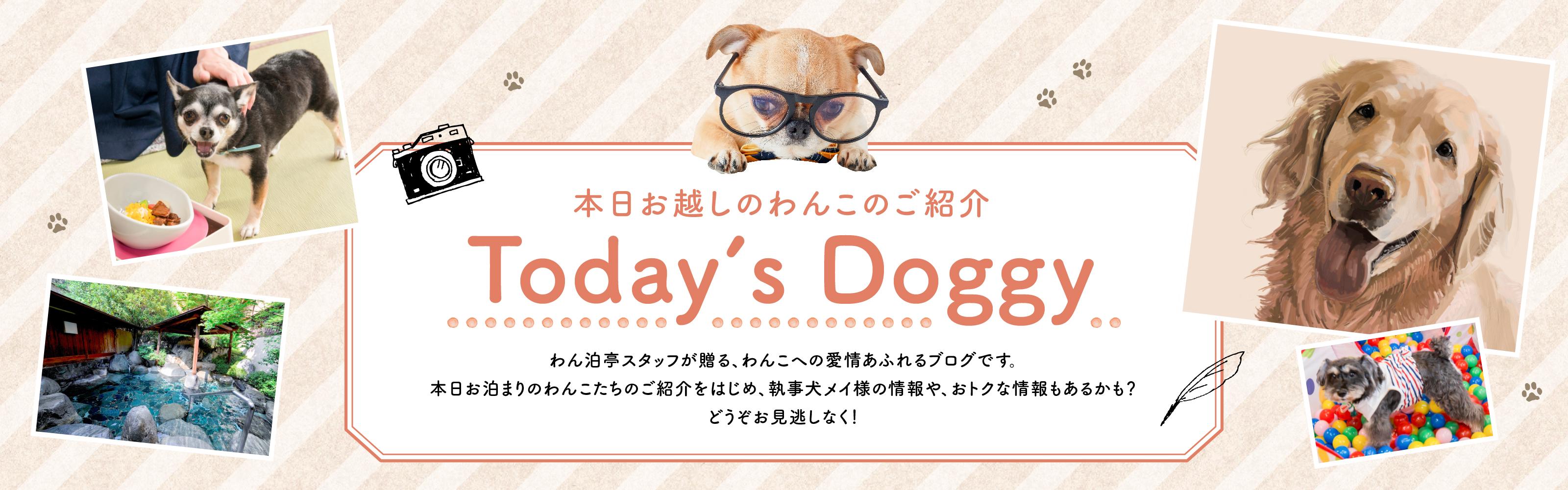 わん泊亭スタッフのToday's Doggy!